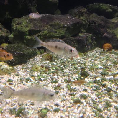 Detroit Belle Isle Aquarium fish