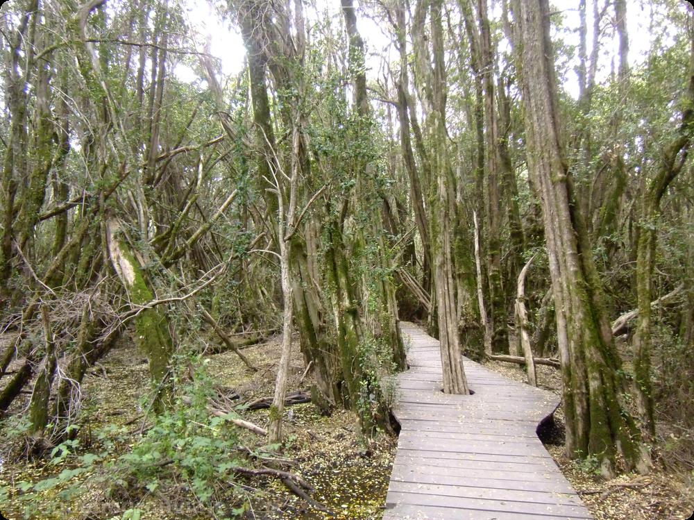 Pitras, Lago Puelo