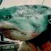 Δείτε τους 5 μεγαλύτερους καρχαρίες που έχουν αλιευθεί video
