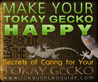 Tokay Geco Care
