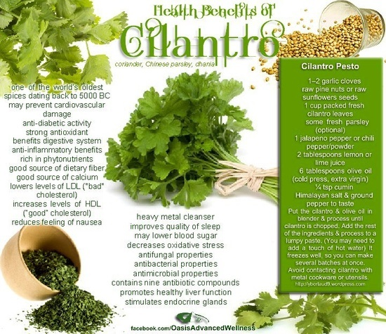 antimicrobial effects of cilantro Methanolic extracts of coriander leaves and stem are reported to have  antibacterial activity 8 but the antibacterial properties of the polyphenol rich  methanolic.