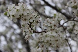 Let Spring In!