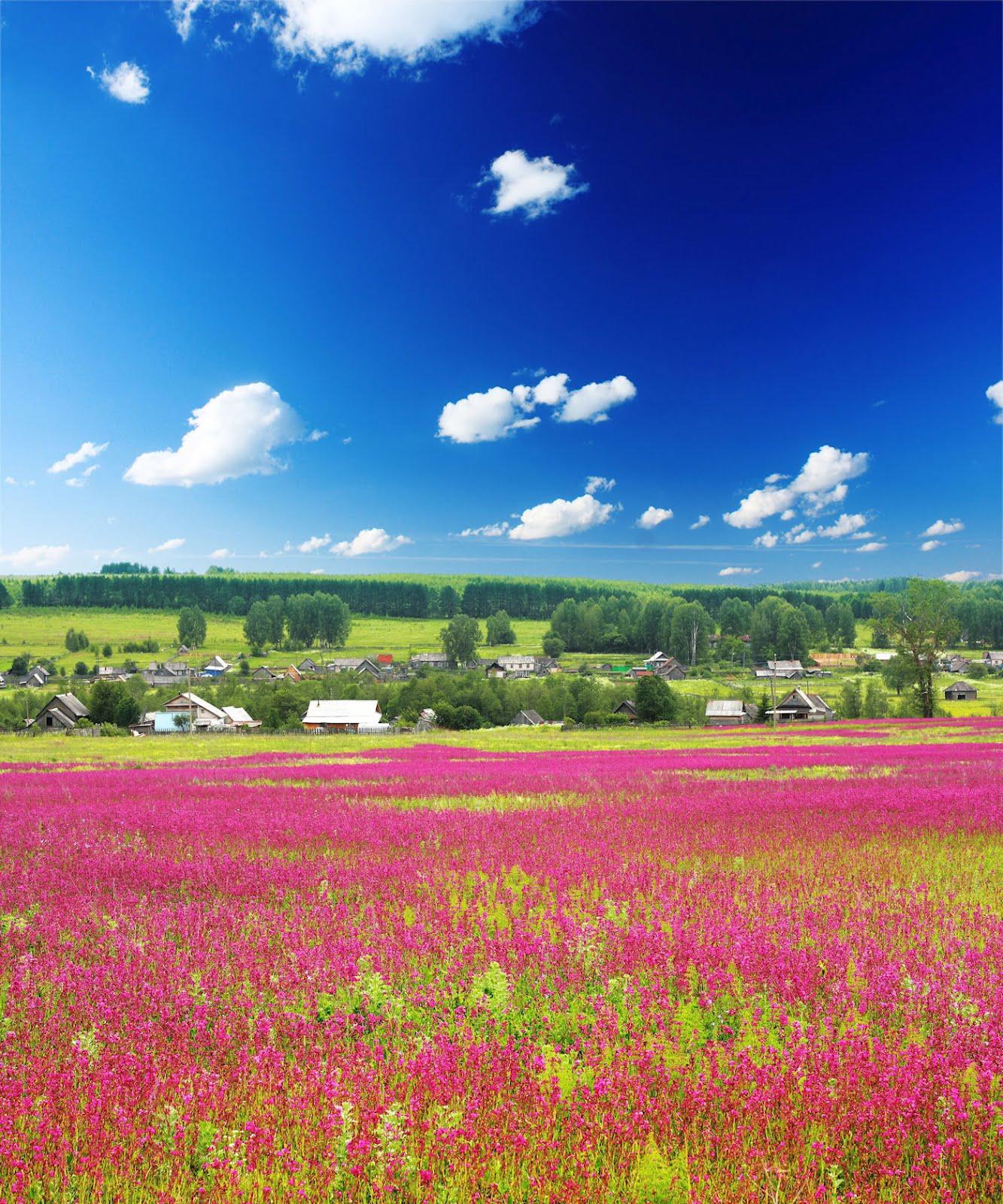 Una postal de primavera desde Holanda - Fotos Paisajes Primaverales Flores