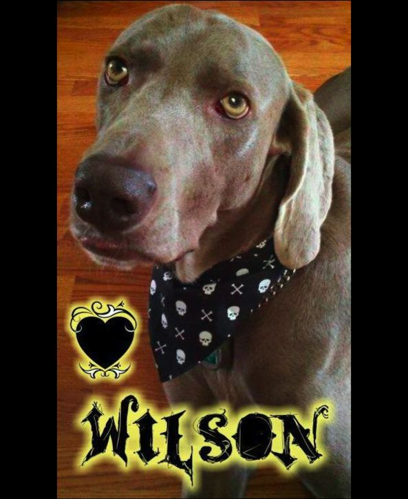 And Wilson was his NAME-O... My dog saved my heart!
