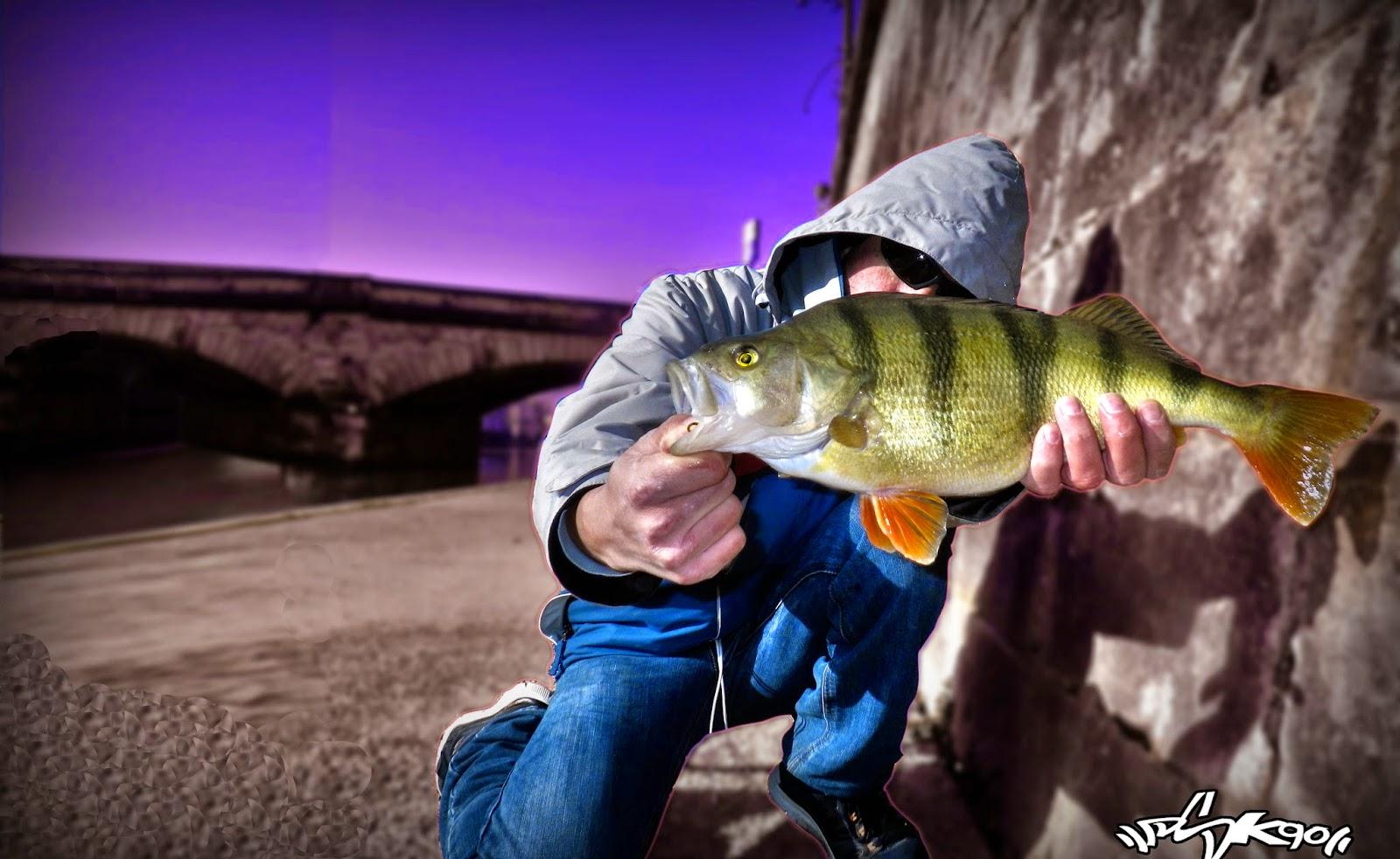 Perche en Streetfishing