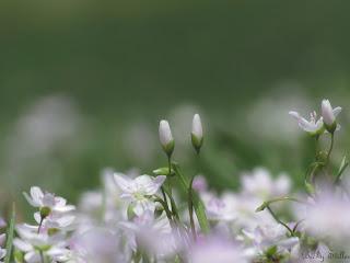 spiritual awakening, spirituality image, spiritual flower, picture