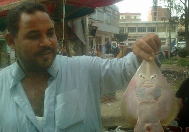 بالصور.. اكتشاف سمكة على شكل انسان