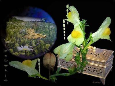 http://www.chezjoeline.com/app/download/10083429695/Fleurs+-+Fantaisie+..+08+07+2015.pps?t=1436374259