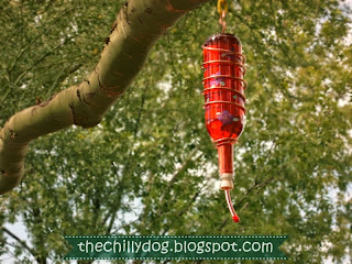 How to fill a wine bottle hummingbird feeder so it doesn't leak by The Chilly Dog