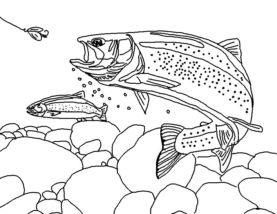 Sketch Of Trout Fish Art Coloring Pages Rainbow Trout Coloring Page