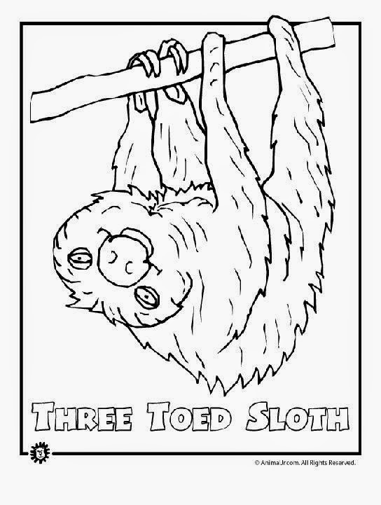 Rainforest Animals Coloring Pages Free