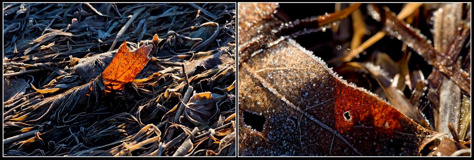 Nova Scotia; Cananda: Indian Path; Ice, Crystals; Grasses