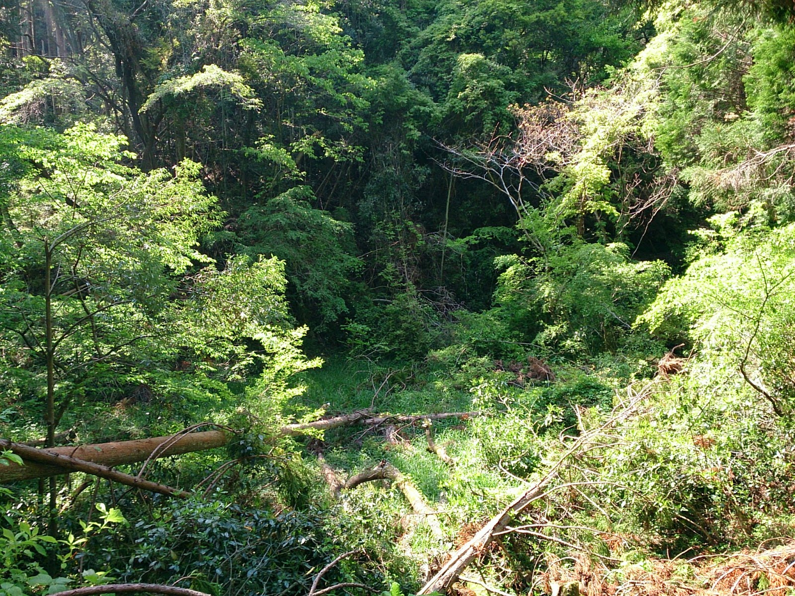 山の生物多様性