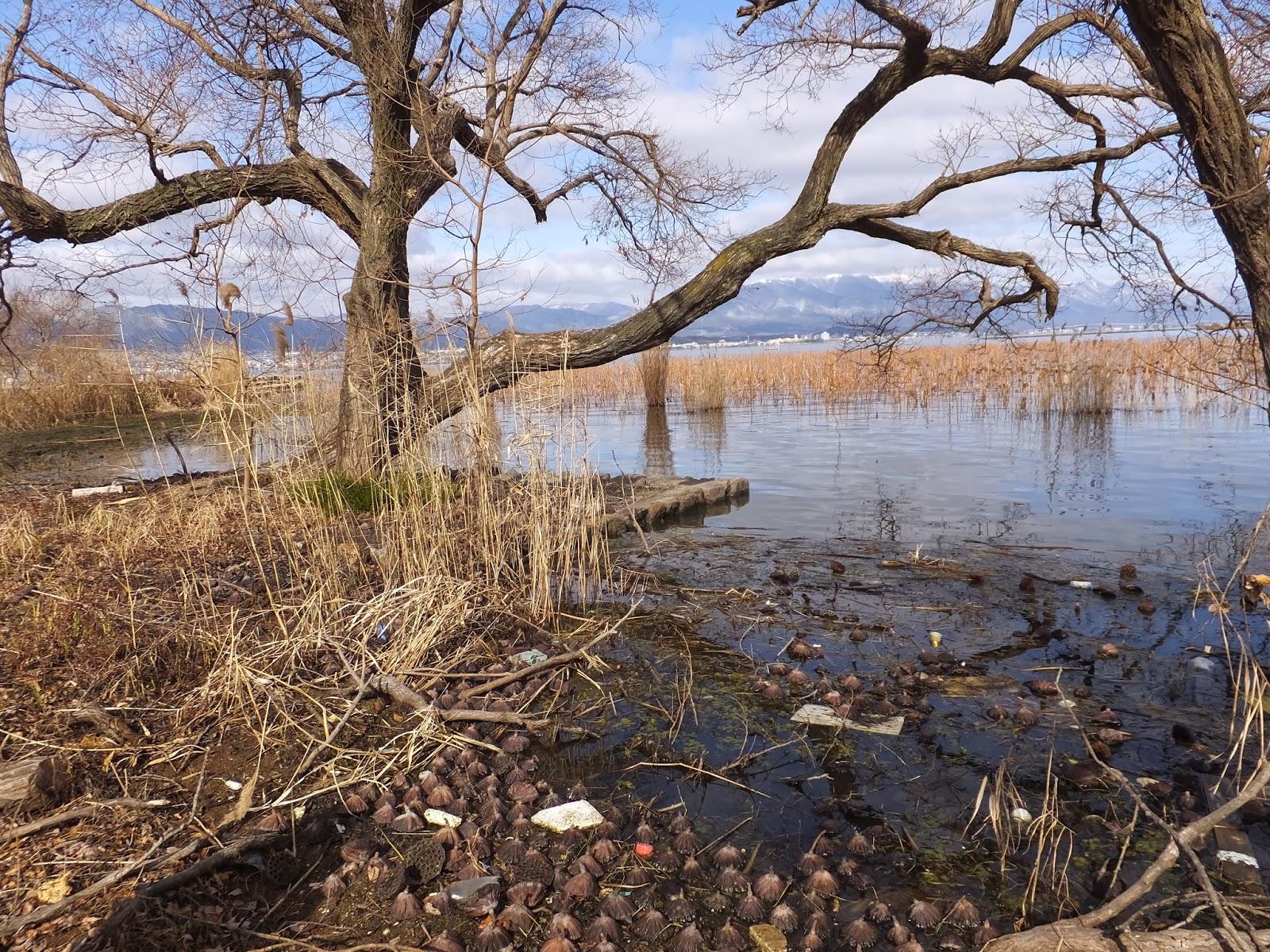 水生植物園みずの森から琵琶湖を眺める。