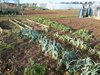 overview of allotment