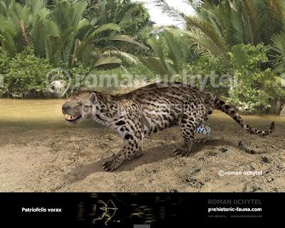 familia extinta Oxyaenidae Patriofelis