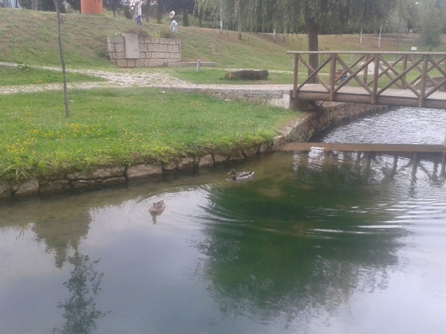 patos na Ribeira de Ul