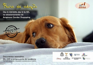 Associação promove feira de adoção de cães e gatos em Arapiraca