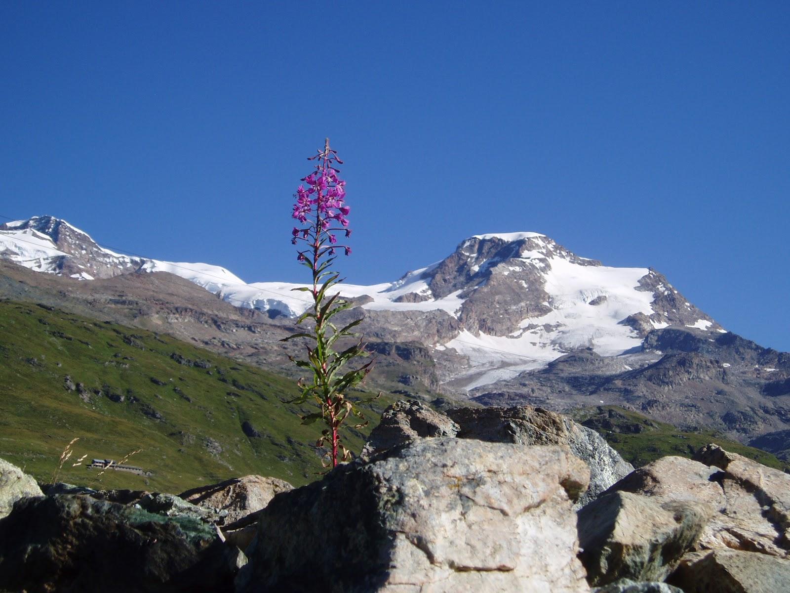 Andarpermonti escursionismo in valle del lys for Cabine di cresta antler