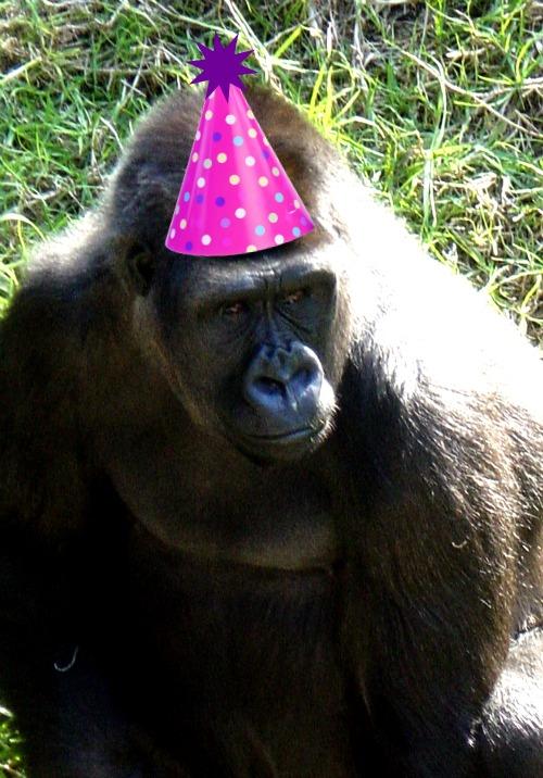 I Am NOT An Anteater Happy Birthday Monifa Gorilla Birthday