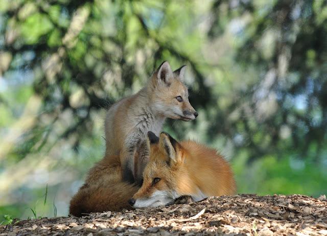 Der Lebensraum Natur braucht die Jagd nicht!