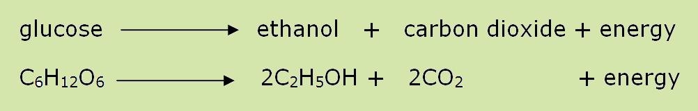 anaerobic respiration in plants pdf