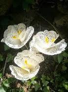 http://www.decoraydiviertete.net/2014/05/flores-utilizando-blondas-de-papel-un.html