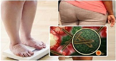 Nueva-evidencia!-La-obesidad-es-causada-por-un-virus!
