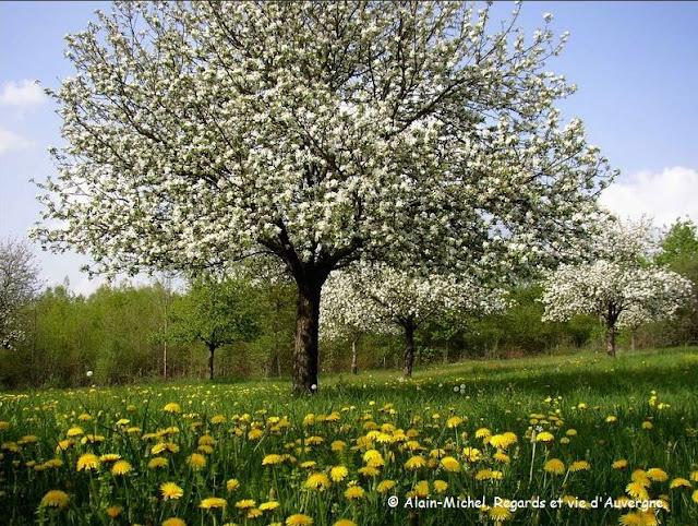 nature au printemps, arbres en fleurs