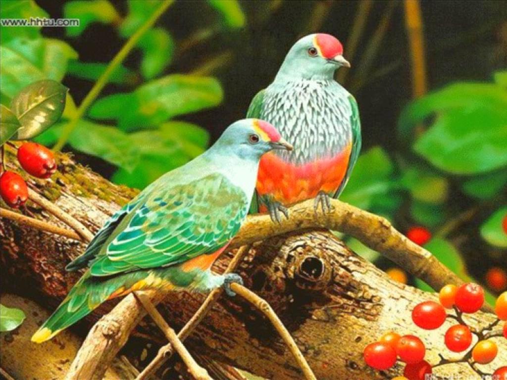 http://1.bp.blogspot.com/-i34rK7uLda0/T-pe_JoCY2I/AAAAAAAAGZ0/K9Ht9tO2sGc/s1600/Bird-wallpaper-6.jpg