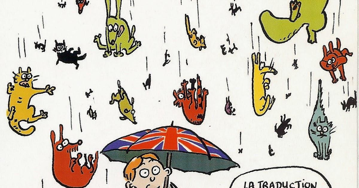 It S Raining Cats Dogs