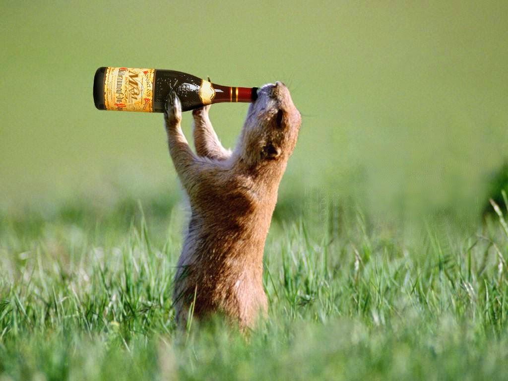 Well-known Imagens de animais variadas fotos Animais selvagens, engraçados  MD21