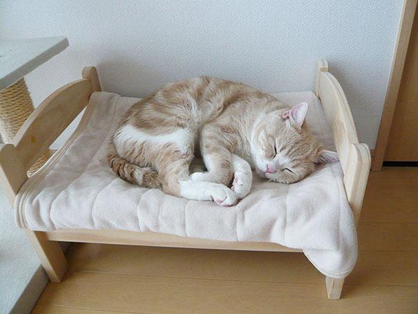 Dueños de gatos japoneses convierten camas para munecas en adorables camas para gatos