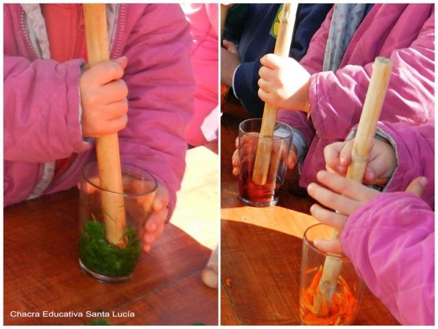 Colores de la naturaleza - Chacra Educativa Santa Lucía