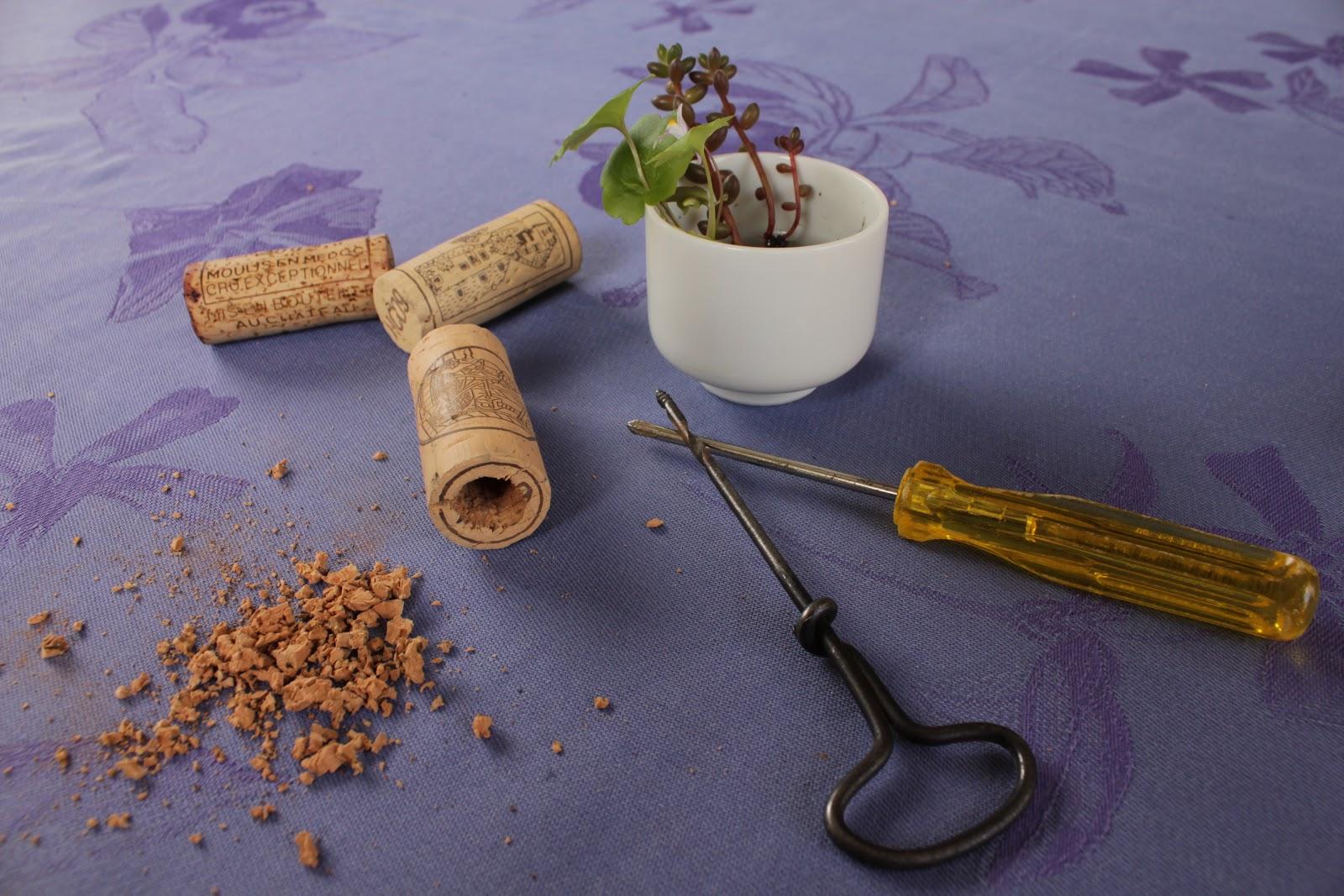 plante grasse bouchon liege