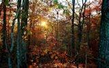Arboles y Bosques en Otoño