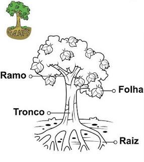 COLOREA TUS DIBUJOS: Plantas para colorear