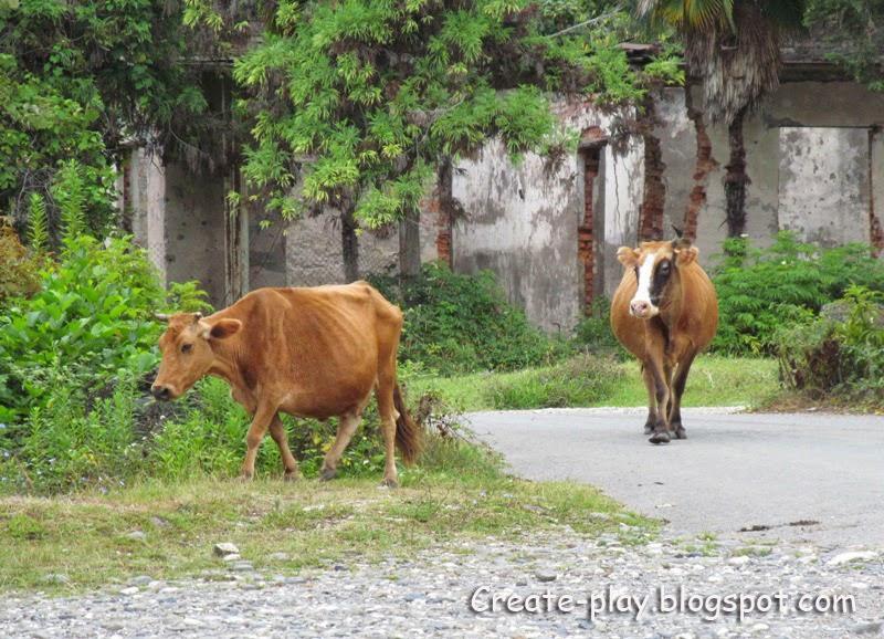 коровы Эшера