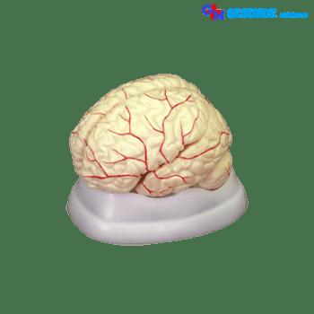 Torso Otak GM-X308