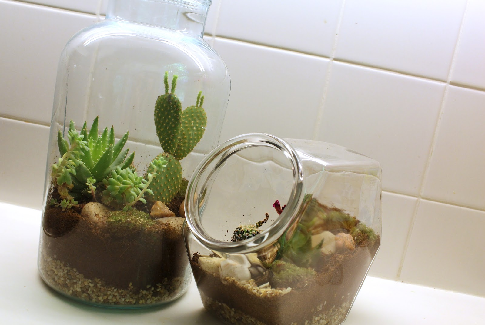 charlottenmarotten diy terrarium im glas. Black Bedroom Furniture Sets. Home Design Ideas