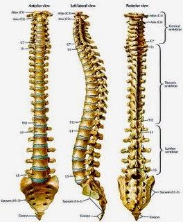 Tumor Tulang: Gejala, Penyebab dan Pengobatannya