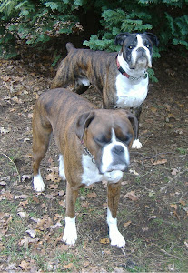Naughty Boxer boys