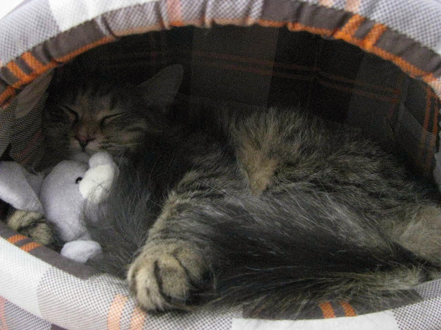Funny cats - part 81 (40 pics + 10 gifs), cat pics, cat sleeping hugging doll