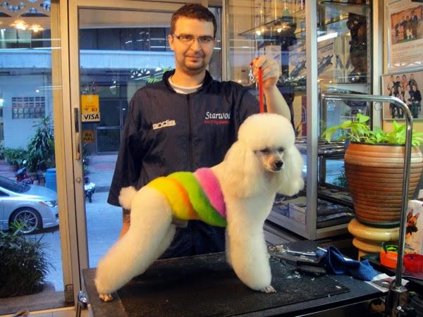 Мастер классы по стрижке собак