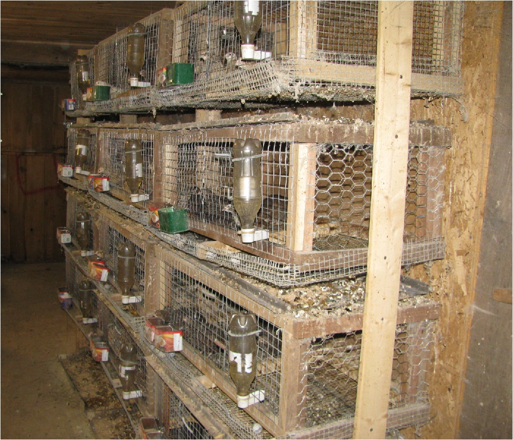 quails cage - photo #32