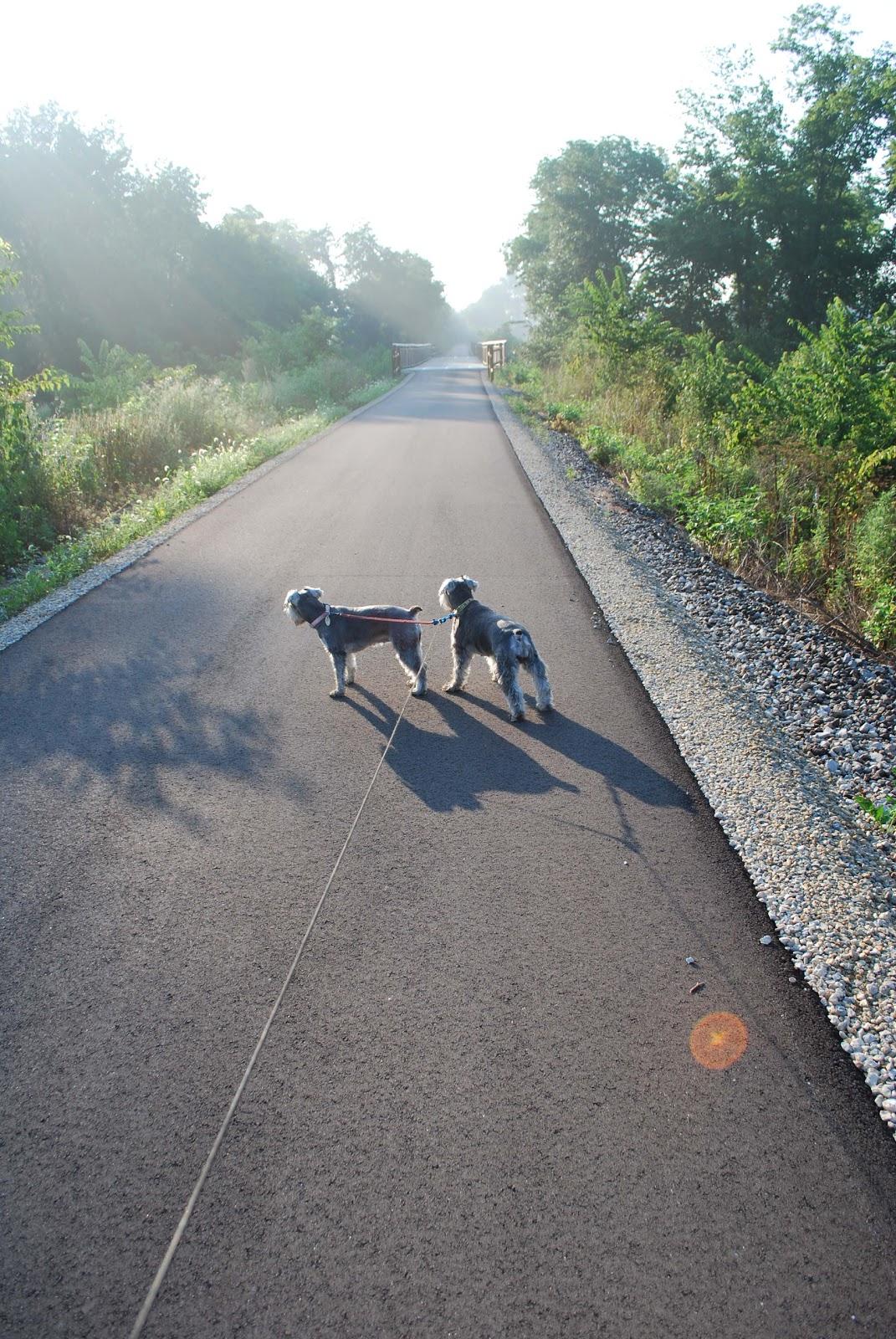 http://1.bp.blogspot.com/-i61xLBLu9kU/TleQ1fHUmBI/AAAAAAAAEHU/lGWDk81-_LI/s1600/bike+path+dogs.jpg