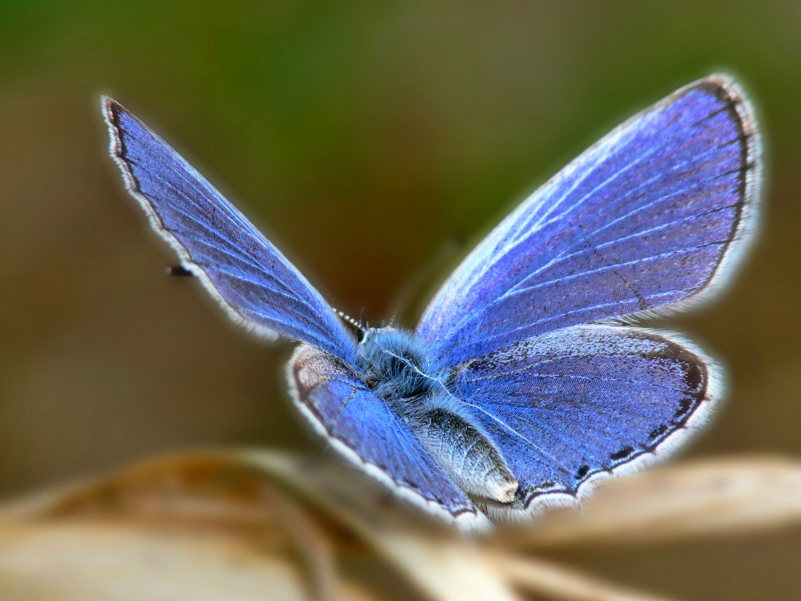Animal 3 Cute Blue Butterfly HD wallpaper