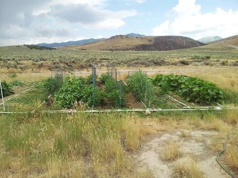 Backyard Farming PVC Drip System Update