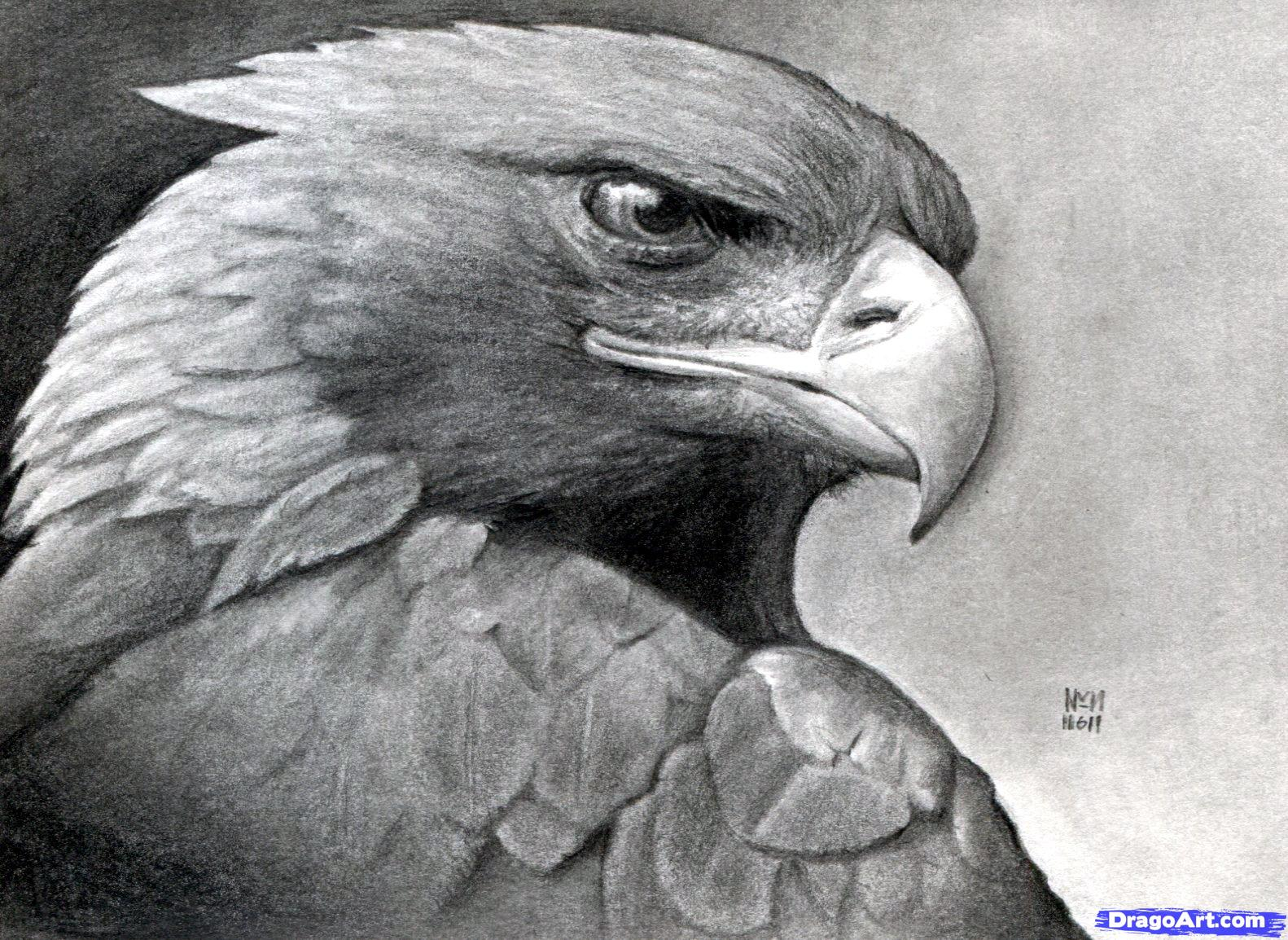 Golden eagle feather tattooEagle Feather Pencil Drawing