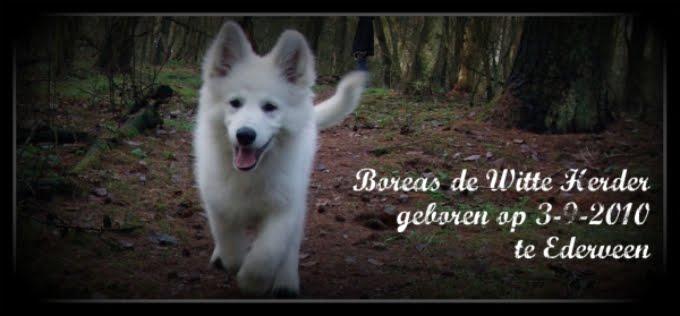 Welkom op de website van Boreas
